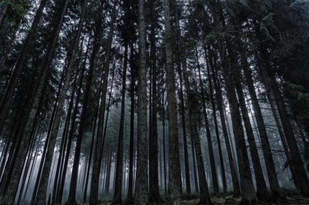 fantasy-forest-world-building-writertowriter